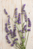 Bunch of lavender flowers - 113910663