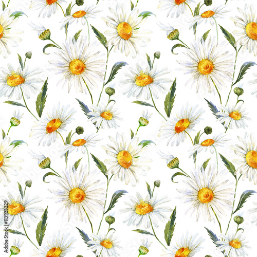 Fototapeta Watercolor daisy pattern