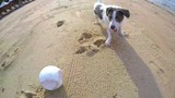 Funny Playful Terrier Dog Playing with a Ball on Beach