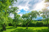 Fototapety Schöner Obstgarten mit Himmel und Sonne