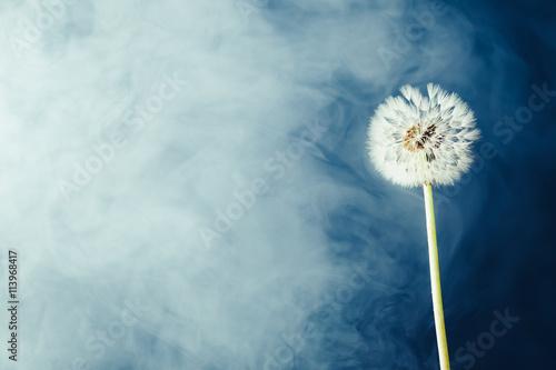 Zdjęcia na płótnie, fototapety na wymiar, obrazy na ścianę : dandelion flower on fog background