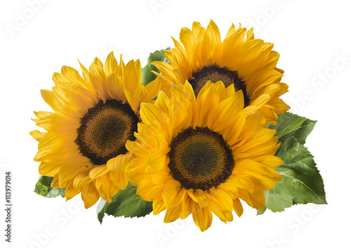 3 sunflower isolated on white background as package design element