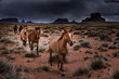 Wild Horses Monument Valley