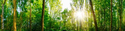 Tuinposter Lime groen Wald Panorama bei Sonnenschein