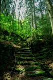 苔むした石段の小道