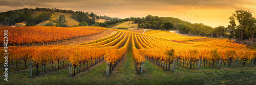 Staande foto Wijngaard Gorgeous Vineyard in the Adelaide Hills