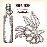 Shea tree butter. Hand drawn branch in sketch style.