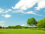 初夏の草原と林風景