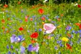 Grußkarte - Blumenwiese - Wildblumen - Sommerwiese