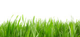 Grass in high definition isolated on a white background - 114118816