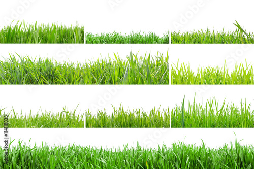 Póster Grass in high definition isolated on a white background