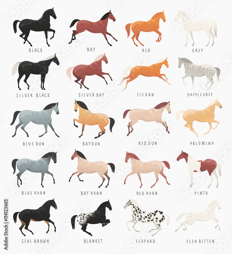 Equestrian clip art illustration of common horse coat colours