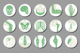 Orthopedic and spine vector icons. Human bone of illustration and anatomy skeleton bone x-ray image