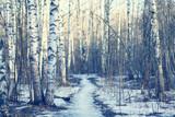 March landscape birch forest background