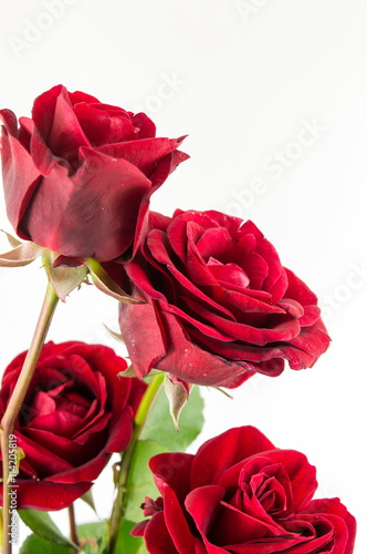 Staande foto Roses Red roses bouquet on white background