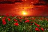 Bright sunrise in poppy field
