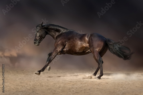 obraz PCV Black stallion run gallop in desert storm