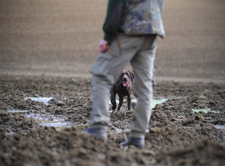 Hunter legs with hunting dog,german pointer, brown dog