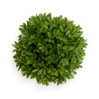 Green Buxus Ball