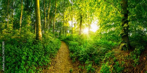 Weg durch den Wald bei Sonnenuntergang