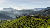 Tea Fields of Sri Lanka, Nuwara eliya