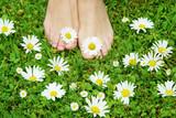 healthy feets, gesunde Füße, Fußpflege, Füße, Wiese, Blumen, Copyspace, barfuß, margeriten, Gänseblümchen