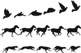 Do The Locomotion 1: motion studies of pigeon, horse and dog - 114305450