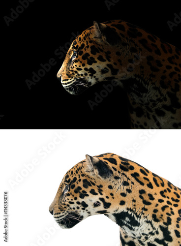 Tuinposter Panter jaguar on black and white background
