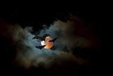 Flying Fox or fruit bat over dark sky - 114339224