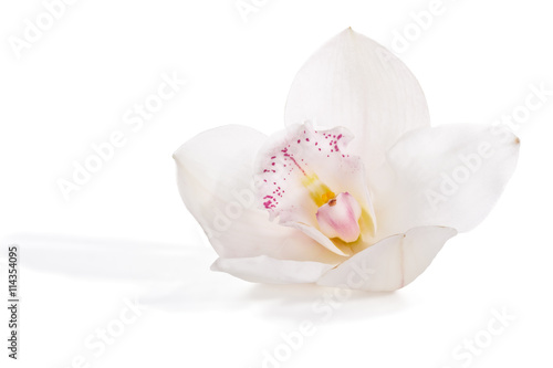 White orchid - 114354095