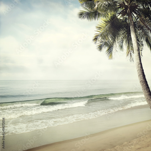 tropical background - 114372036