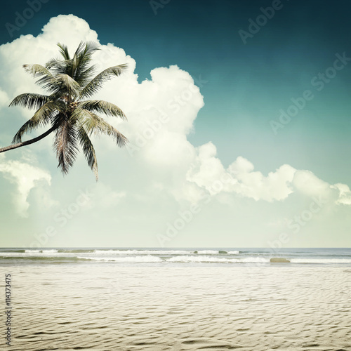 tropical background - 114373475