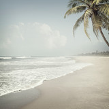tropical background - 114375664