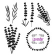 Set of lavender. Hand drawn bunch of lavender, lavender flowers and leaves separatly. Black silhouettes isolated on white. Vector illustration.