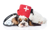 Sleeping Cocker Spaniel puppy wearing hat doctor with stethoscope. isolated on white