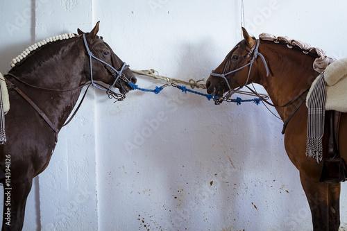 Zdjęcia na płótnie, fototapety, obrazy : Caballos en la cuadra. Caballos de rejoneo. Primer plano de caballos.