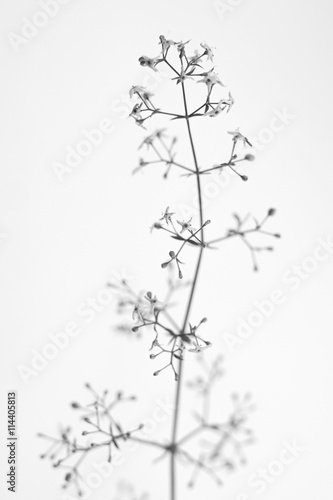 Black and white macrophoto of plant object with depth of field - 114405813