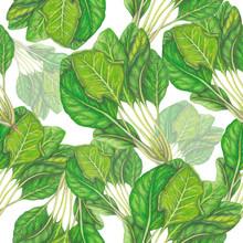 Naadloos patroon van de hand getekend spinazie