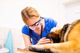 Veterinarian examining German Shepherd dog with sore eye.