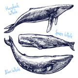Whales Set, Collection Of Different Hand Drawn Whales