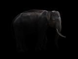 male elephant standing at night time