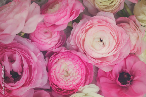 Pink and white ranunculus flowers Poster