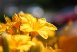 Lily wallpaper - 114464867
