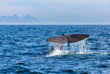 The sperm whale tail with water spray in the ocean, Norway, mountains in the background