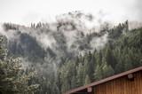 Bosco con nebbia