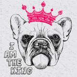 Bulldog w koronie