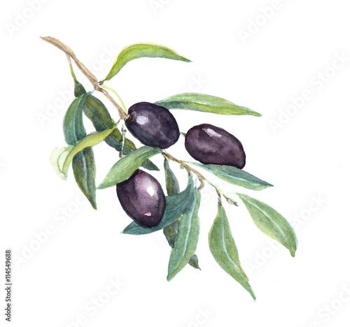 Juliste Olive branch - black olives vegetables and leaves. Watercolor