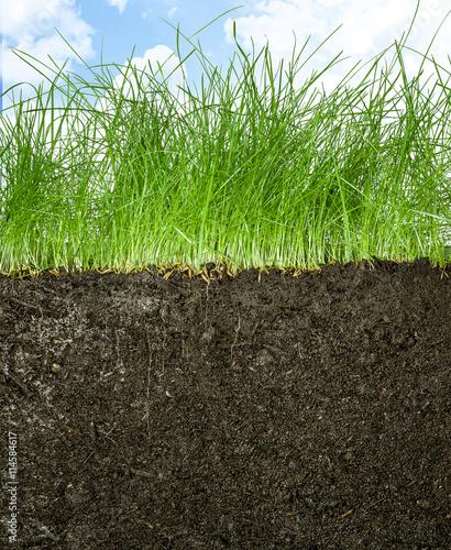 Papiers peints Herbe Querschnitt von Rasen mit Erdreich