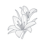 Two Lilies Flower Monochrome Drawing For Coloring Book