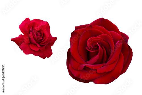 Zdjęcia na płótnie, fototapety, obrazy : Red rose